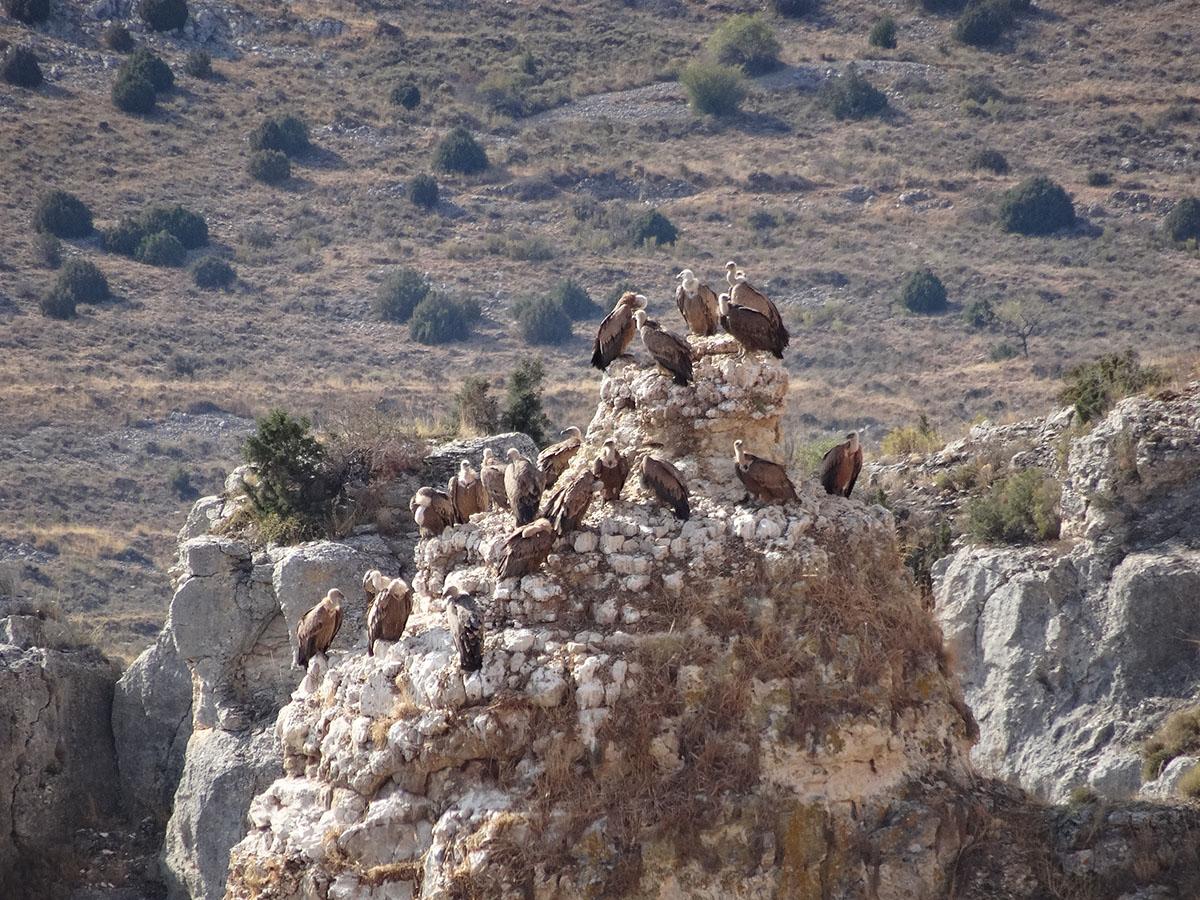 Excursion Calatayud hoces del rio mesa7
